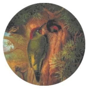 picot (color)