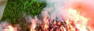 foguera Sant Antoni